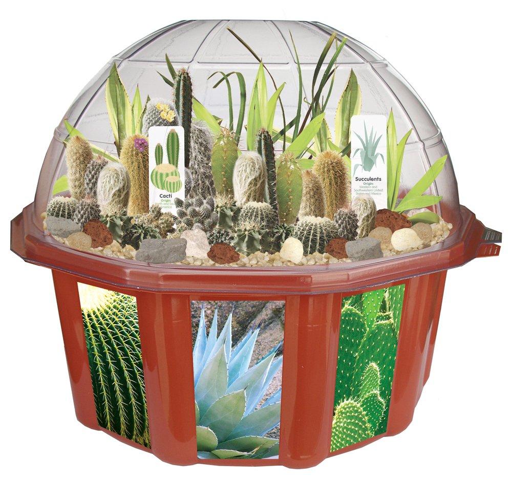 amazon com dunecraft dome terrariums desert biodome toys u0026 games