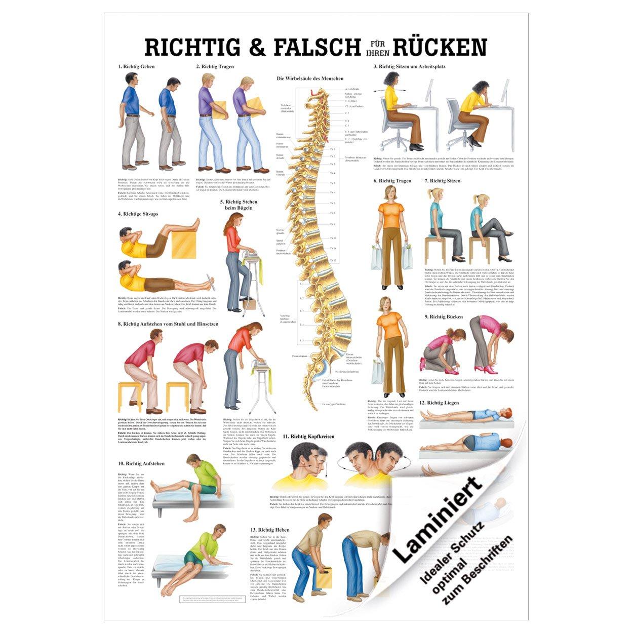 Richtig u. falsch für Ihren Rücken Lehrtafel Anatomie 100x70 cm med ...