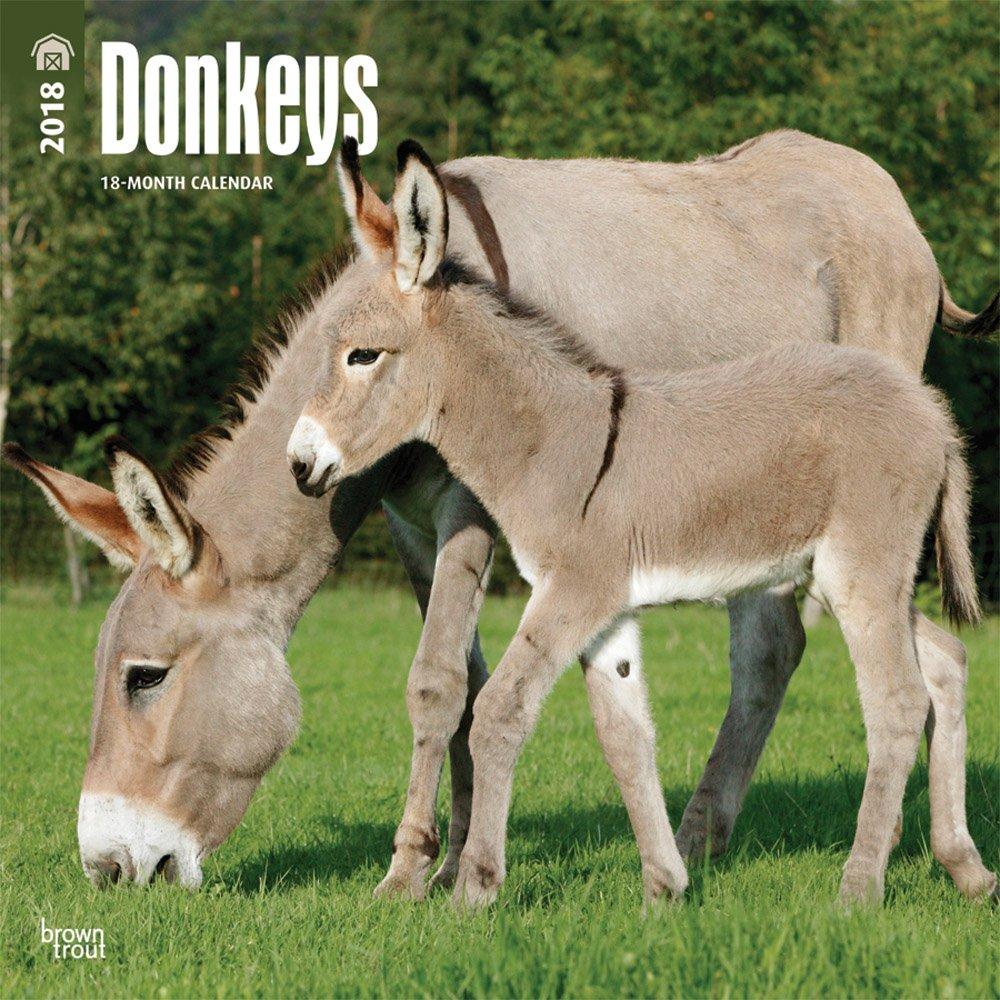 Read Online Donkeys 2018 12 x 12 Inch Monthly Square Wall Calendar, Domestic Animals (Multilingual Edition) pdf epub