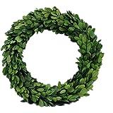 """Preserved Garden Boxwood Round Wreath 10"""""""