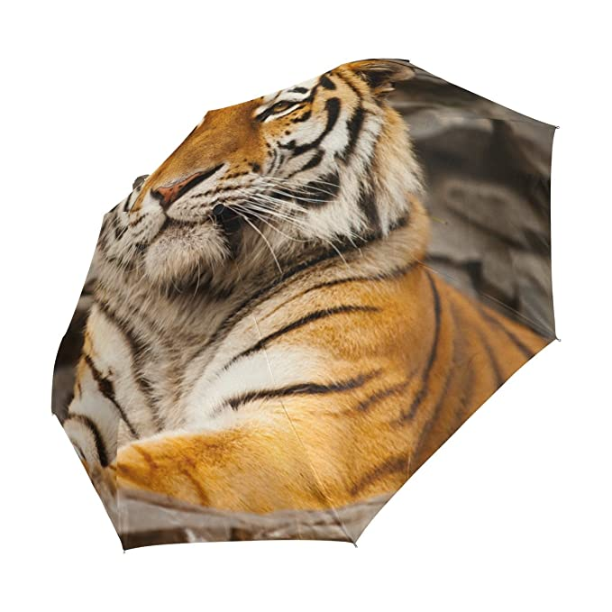 Amazon.com : Tiger Pattern Print Lightweight UPF 50+ Anti-UV Parasol Waterproof Windproof 3 Folds Auto Open Close Umbrella : Sports & Outdoors