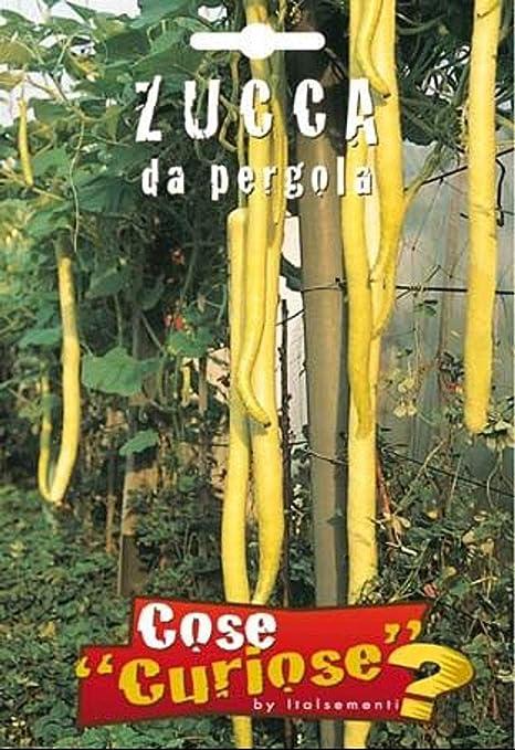 Portal Cool 5/6 Semillas/Semillas de calabaza Lagenaria Siciliana Da Pergola: Amazon.es: Hogar