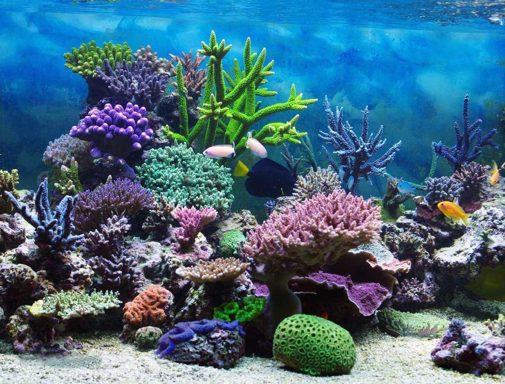 SUNNY Star 7 x 5ft telón de fondo mundo submarino acuario colorido Coral pescado azul mar vinilo photography Fondo bebé ducha niños niñas feliz primera ...