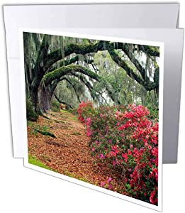 "3dRose Moss Covered Trees Charleston Garden, Sc Greeting Cards, 6"" x 6"", Set of 12 (gc_56086_2)"