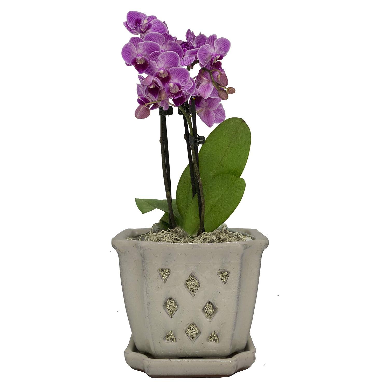 Trendspot Orchid Pot
