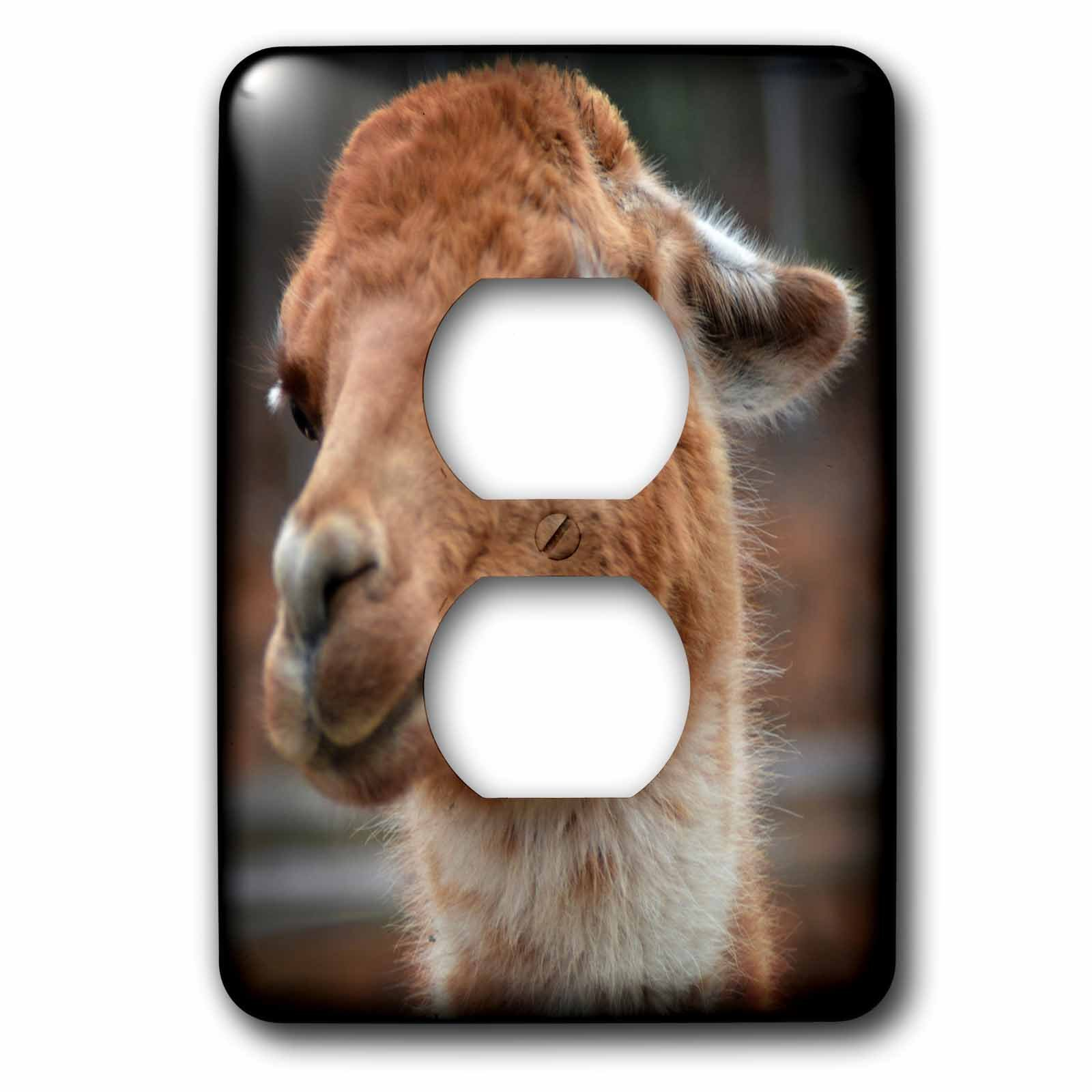 3dRose WhiteOaks Photography and Artwork - Lamas - Cute as a Button is a photo of a lama trying its best to be cute - Light Switch Covers - 2 plug outlet cover (lsp_265339_6)
