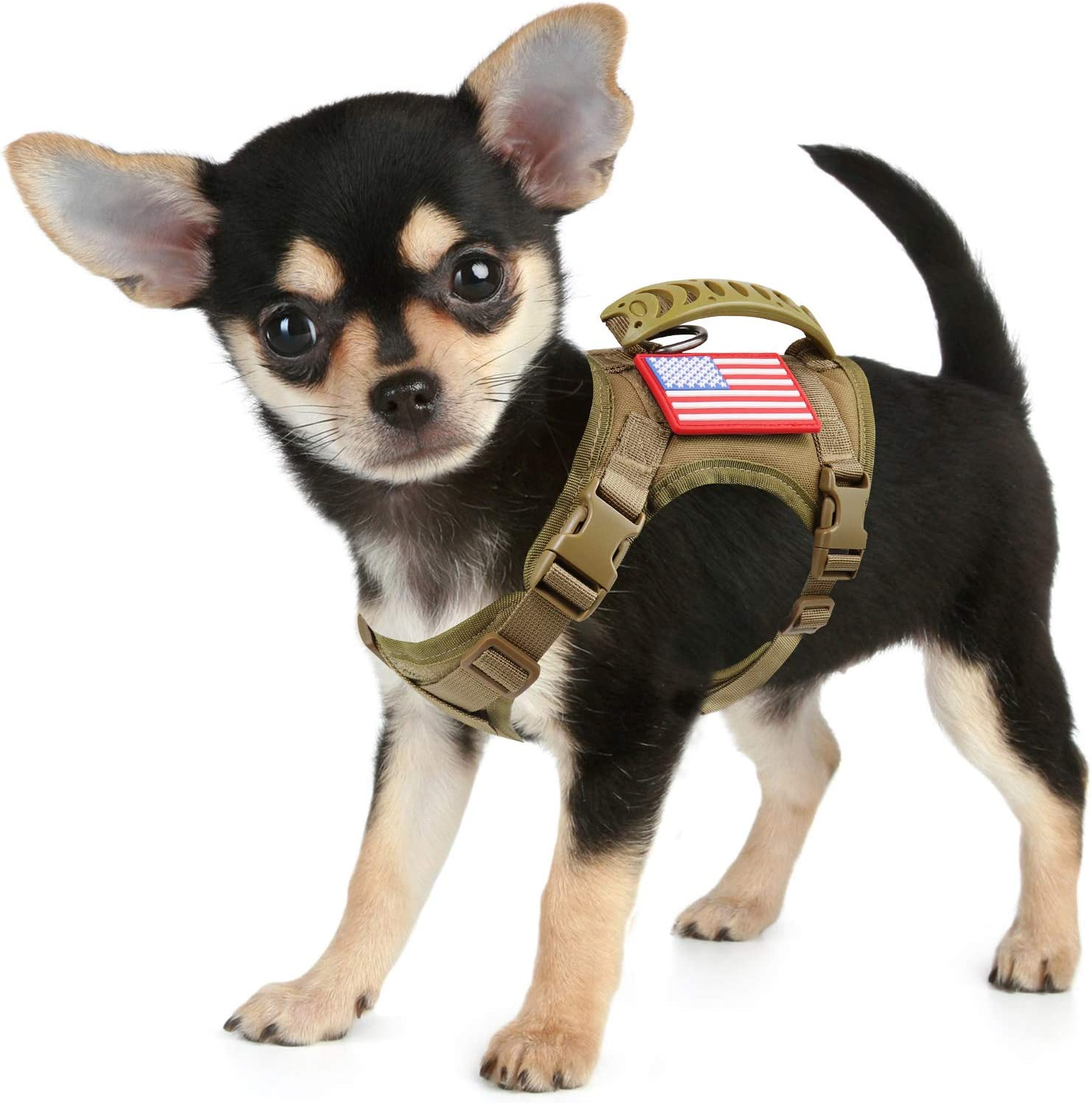 Image of a cute little dog wearing a harness in tan color, with buckles and an American flag tag.
