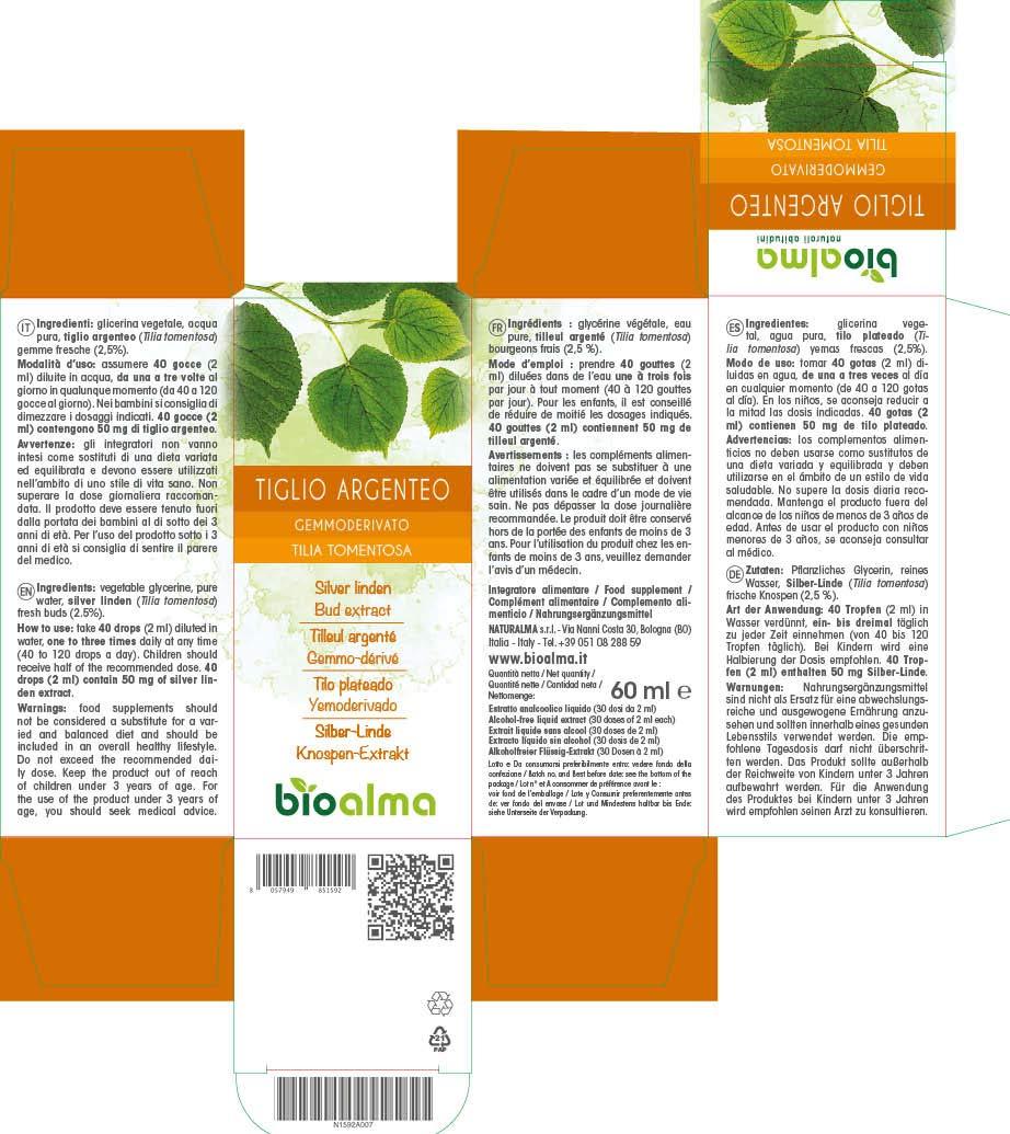 TILO PLATEADO (TILIA TOMENTOSA) YEMODERIVADO BIOALMA - 60 ML. Elaborado a base de yemas muy puras de tilo plateado. 100% natural, sin azúcares añadidos.