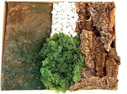 Caja corcho Liquen piedras carta-roccia: Amazon.es: Hogar