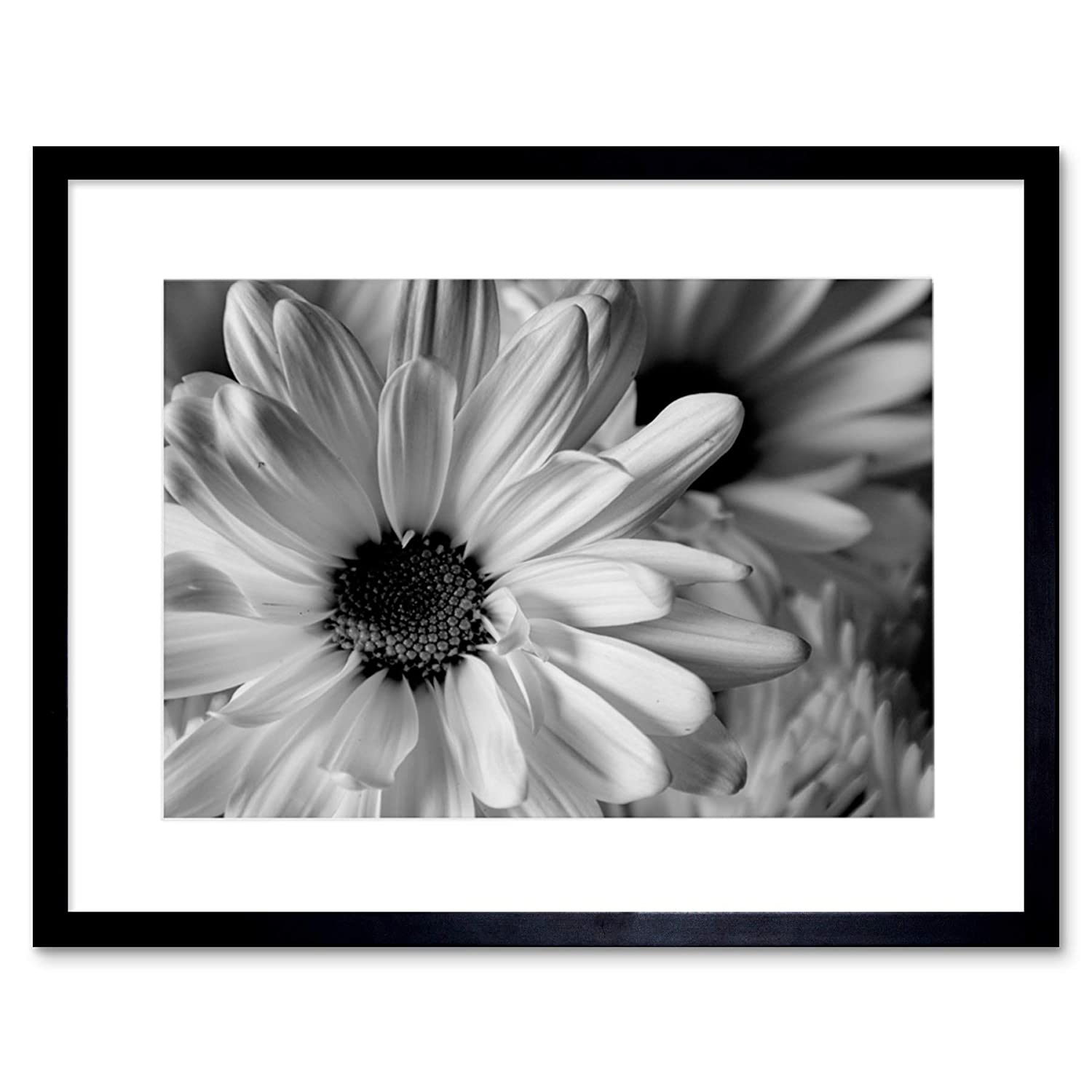 Amazon com the art stop photo black white flower petals framed print f12x2823 posters prints