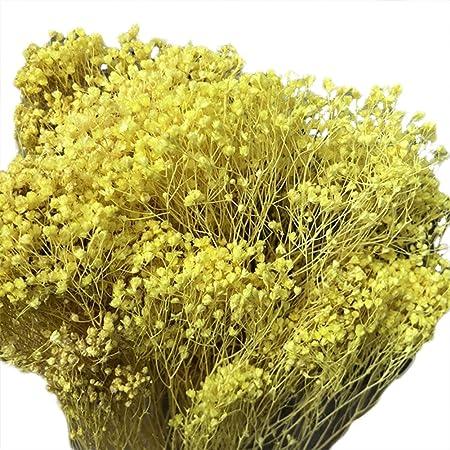 WDOIT - Ramo de Flores secas Naturales Gypsophila, para decoración de casa, jardín, casa, Boda, Fiesta, 1 Piezas: Amazon.es: Hogar