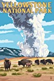 Yellowstone National Park - Old Faithful Geyser and Bison Herd (9x12 Art Print, Wall Decor Travel Poster)