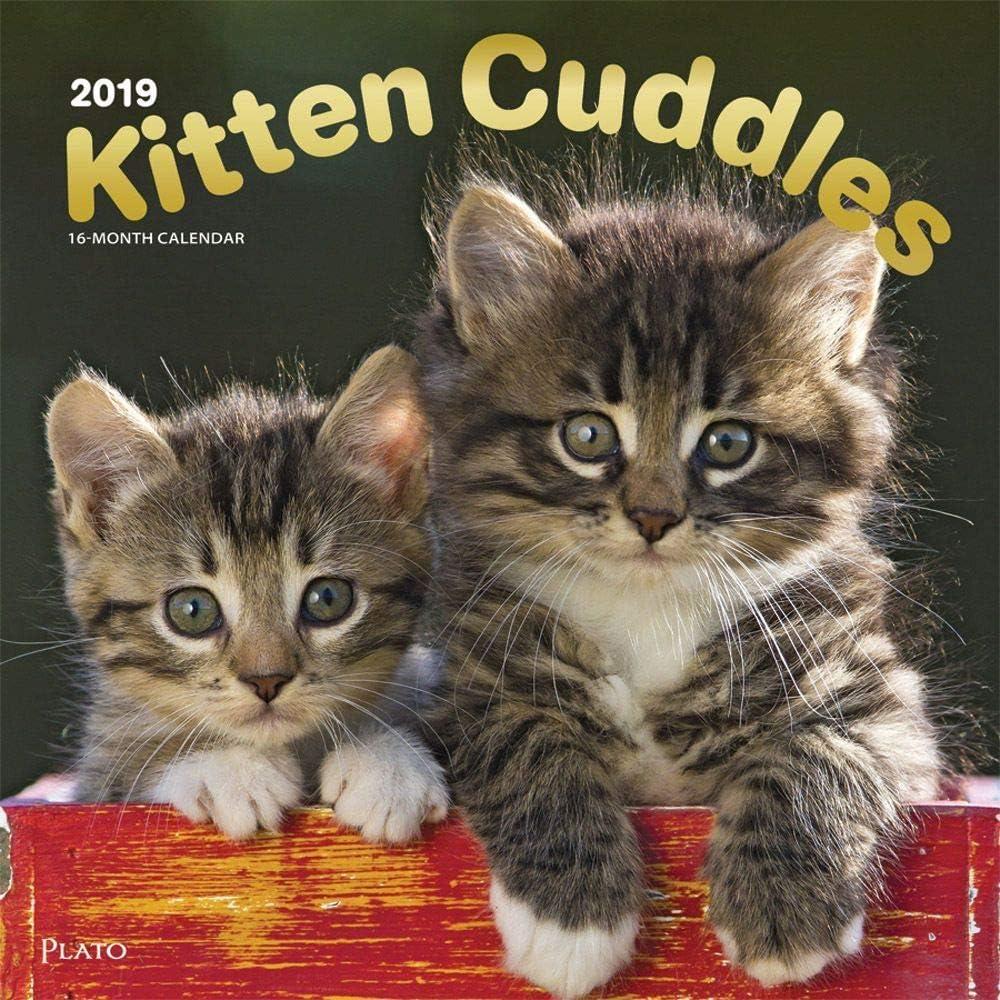 BrownTrout 2019 Cuddle Kittens 2019 - Calendario de pared, diseño de gatitos: Amazon.es: Oficina y papelería