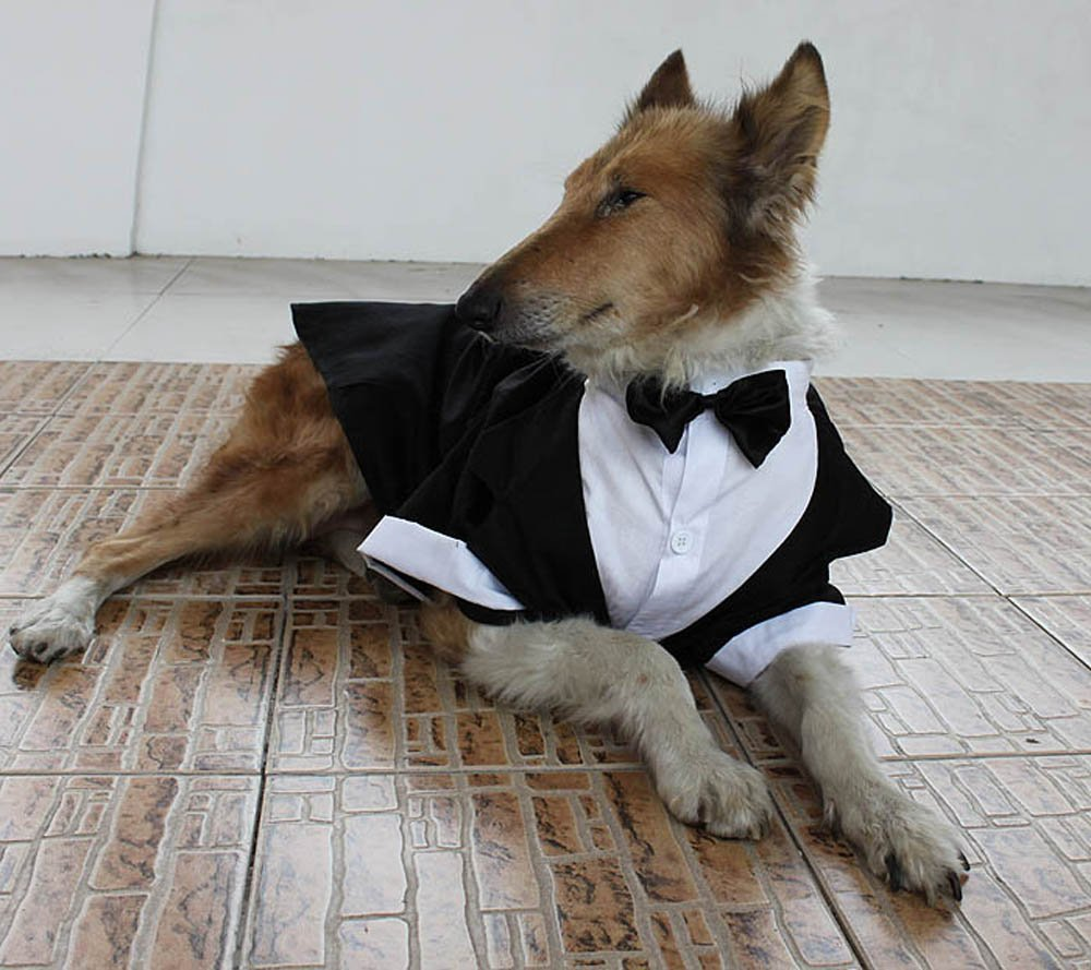 Evursua Large Dog Tuxedo Wedding Party Suit,Dog Costumes for Large Dogs Golden Retriever Samo Bulldogs,Gentleman Dog Attire with Bowite (Black, XL) by Evursua