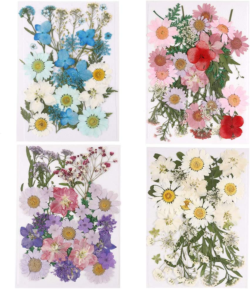 4Pack Mixed Real Dried Flowers for Scrapbooking//Nail Art Decor//DIY Art Makeup Floral ruggito 140 Pcs Natural Pressed Dried Flowers and Green Leaves