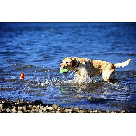 Chuckit Tiburón Aleta pelotas de agua flotante con gorro 1 pieza ...