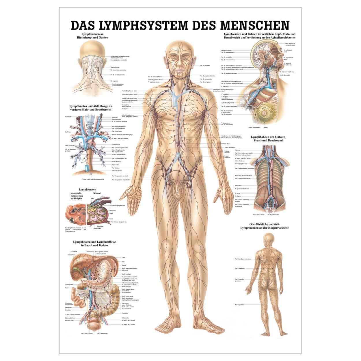 Wunderbar Hals Räume Ct Anatomie Zeitgenössisch - Anatomie Von ...