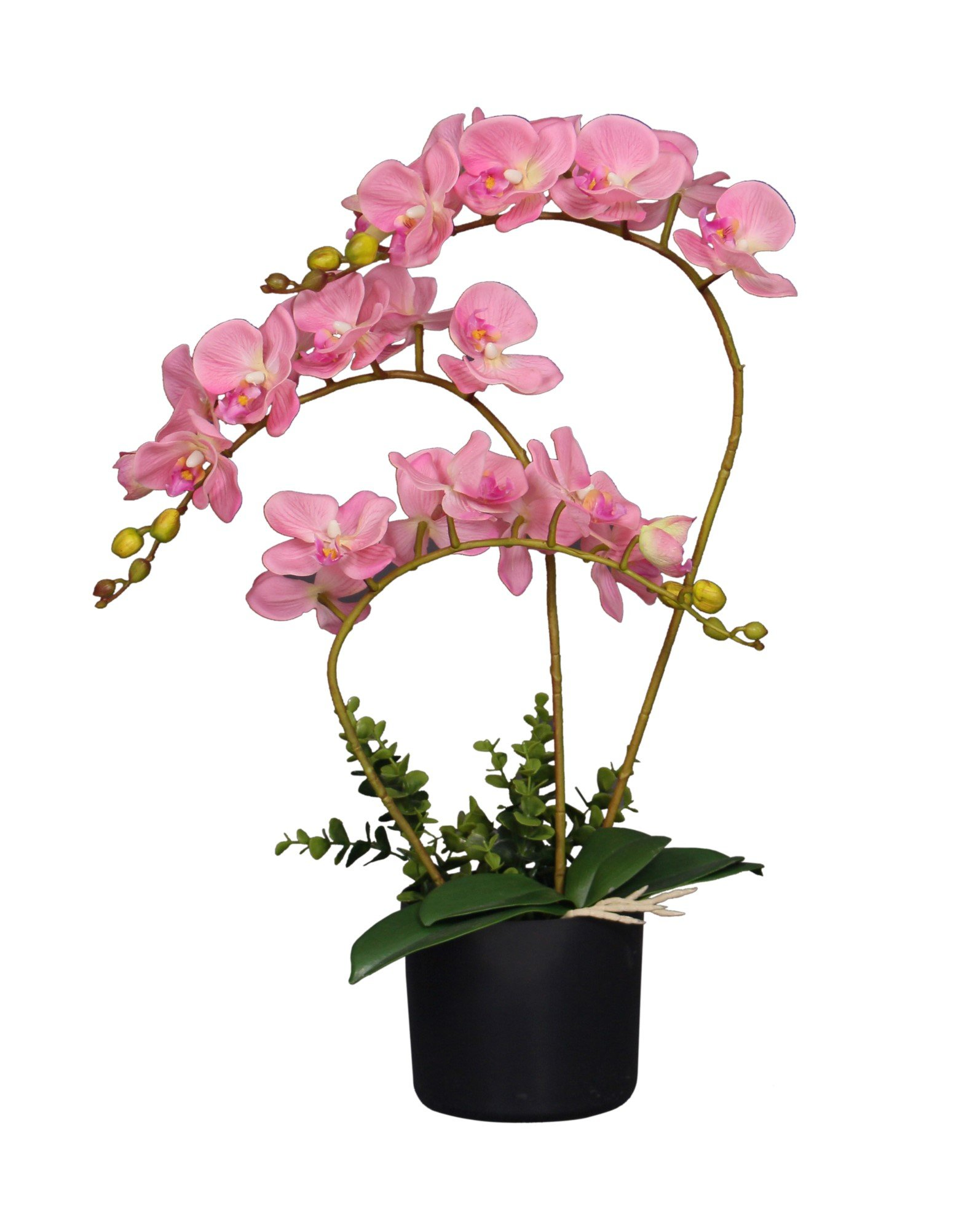 AMERIQUE Gorgeous and Unique 2' Artificial Silk Flower Plant, with Nursery Plastic Pot, Feel Real Technology, Super Quality, White Orchid