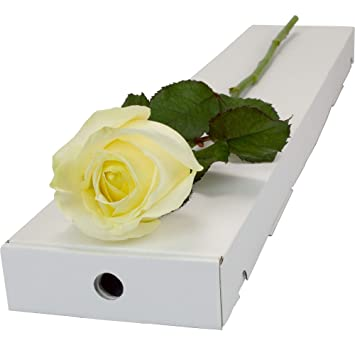 White Rose Fresh Presented In A Letterbox Friendly Long Stemmed Single Rose Box And Delivered For Free
