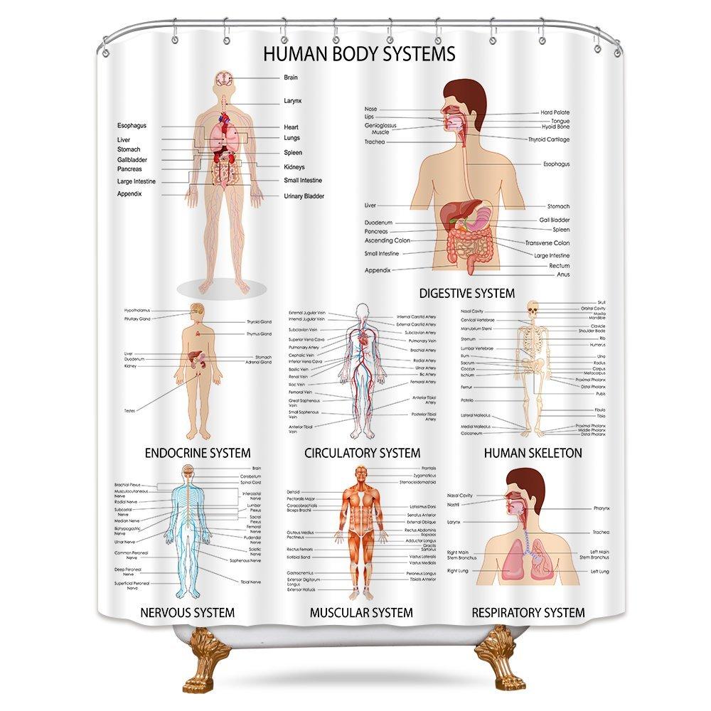 Amazon Riyidecor Human Organ Shower Curtain Anatomy Organ Body