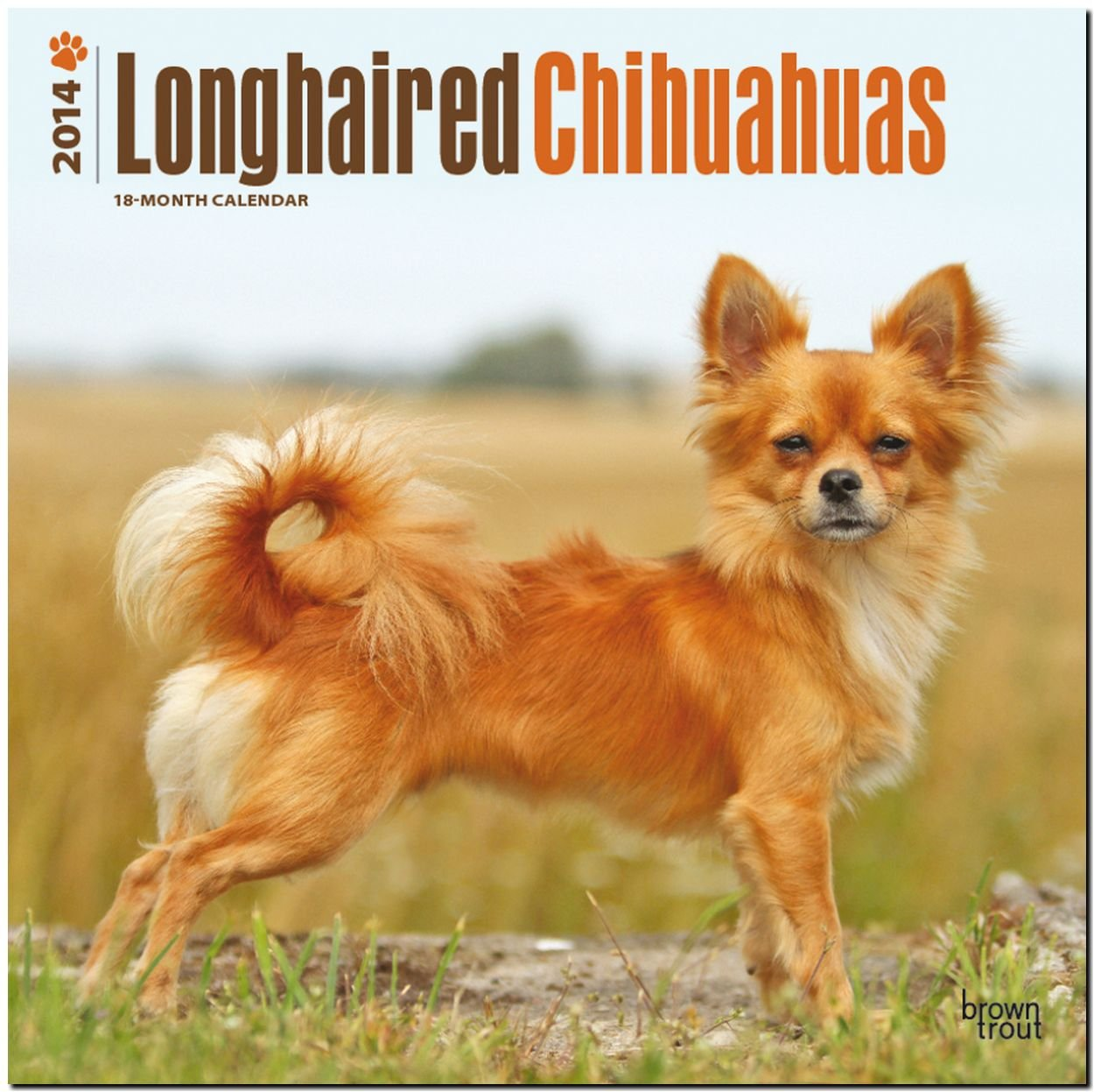 Longhaired Chihuahuas 2014 Calendar, 18-Month Calendar (Multilingual Edition) pdf