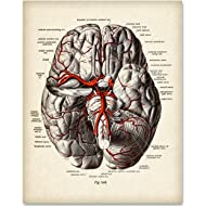 Brain Diagram With Veins - 11x14 Unframed Art Print - Makes a Great Gift For Nurse's Day!