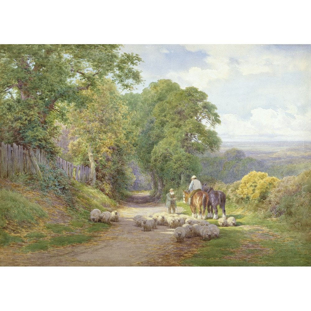 Sheep in the Lane, Charles James Adams, cartoncino arte acquerelli 315 gmq, Image size: 260mm x 362mm (10.25' x 14.25') Image size: 260mm x 362mm (10.25 x 14.25) The Medici Society Limited