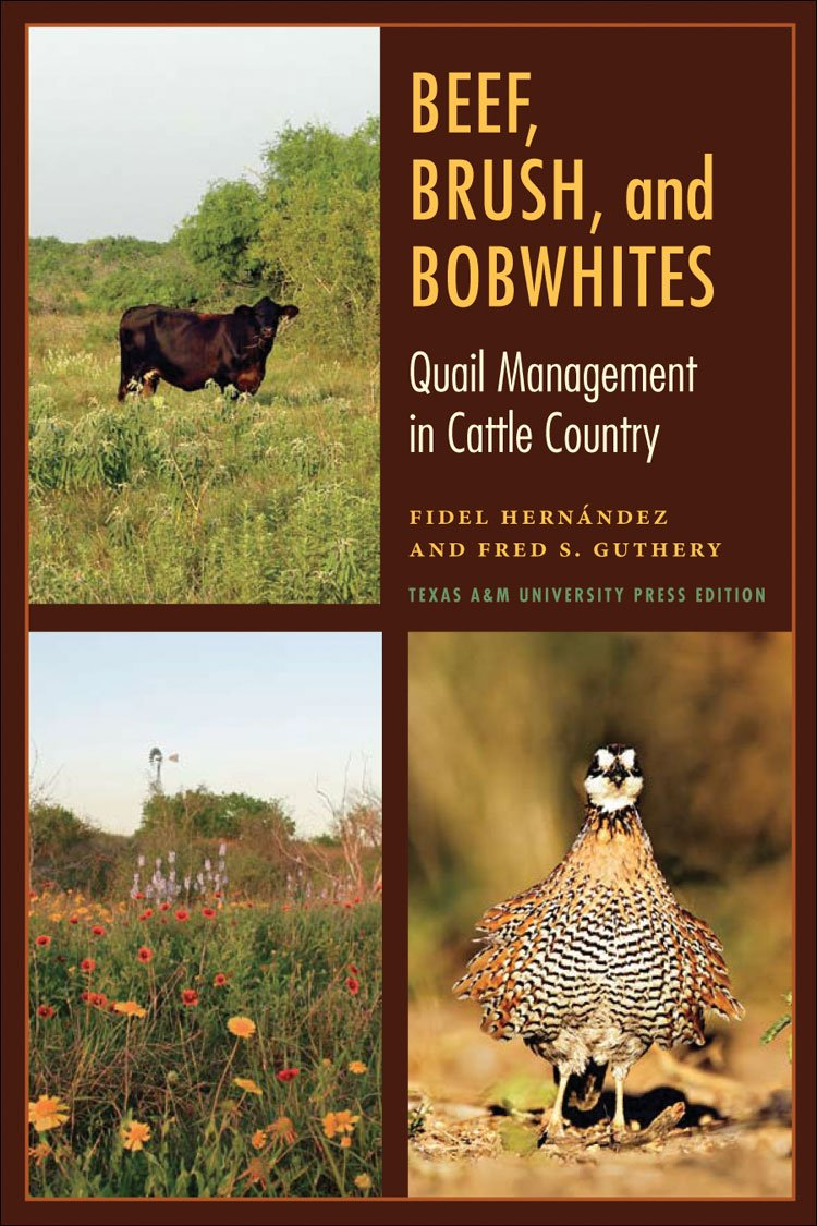 Beef, Brush, and Bobwhites: Quail Management in Cattle Country (Perspectives on South Texas, sponsored by Texas A&M University-Kingsville)