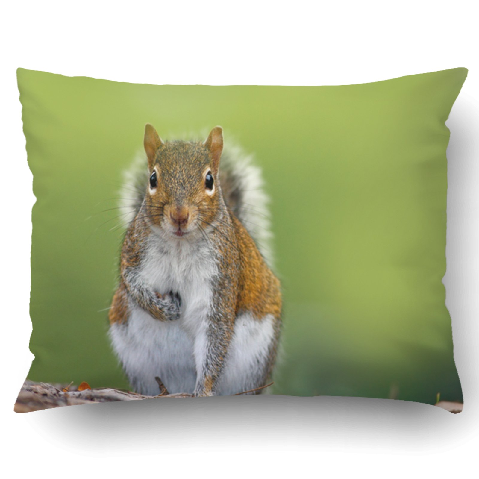 Emvency Pillow Covers Decorative Funny Image From Wild Nature Gray Squirrel Sciurus Carolinensis Cute Animal Bulk With Zippered 20x26 Standard Pillow Case For Home Bed Couch Sofa Car One Sided