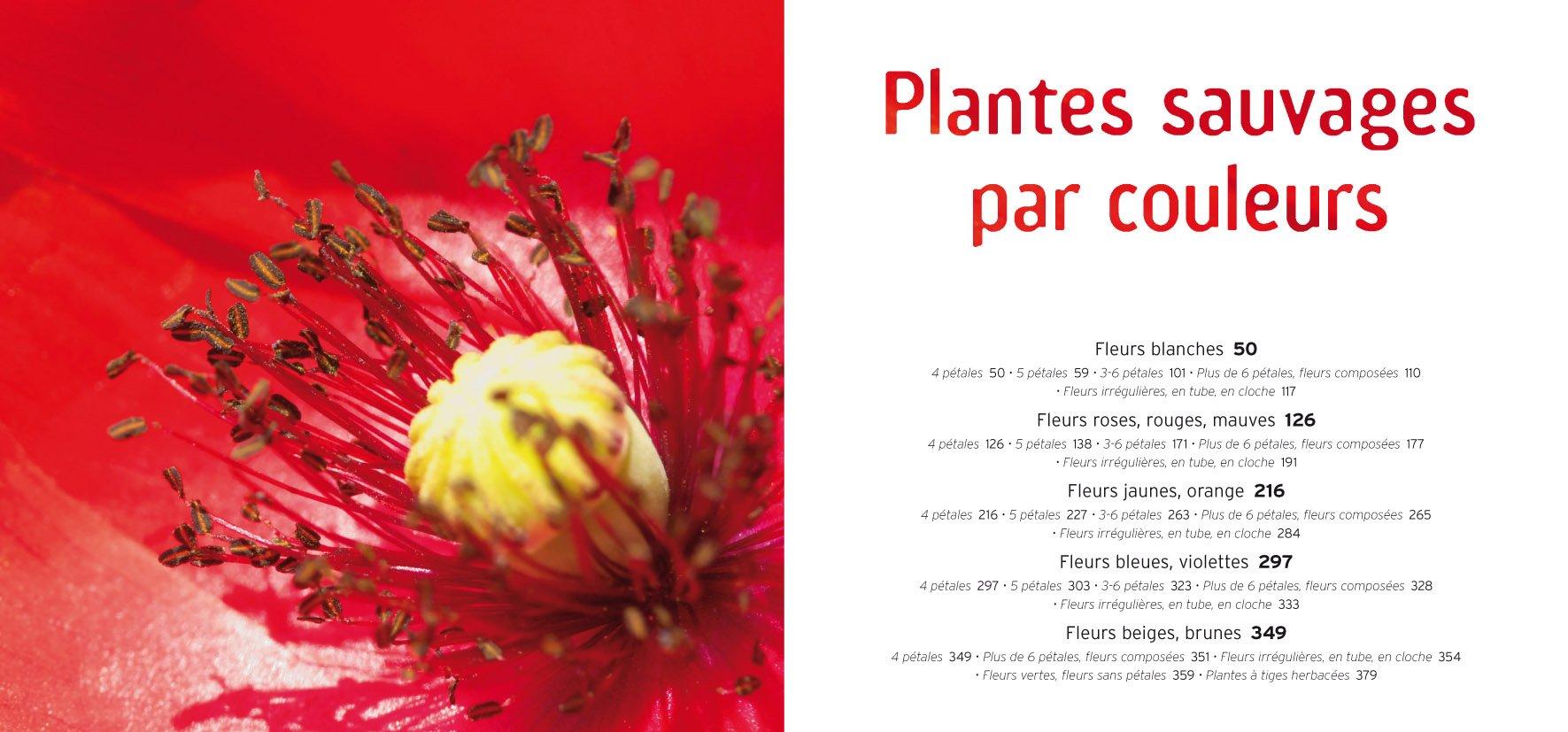 Amazon Fr Plantes Sauvages Guide Tout Reconnaitre Dans La Nature