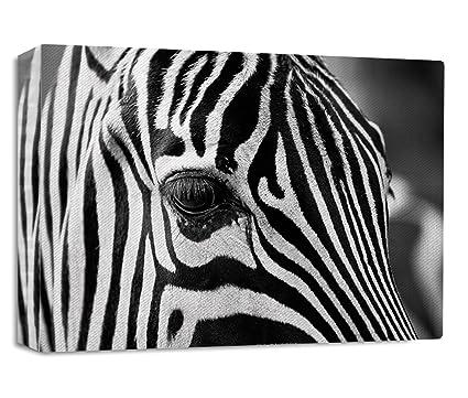Amazon.com: Style in Print Zebra Head Eye Streched Canvas Wrap Frame ...