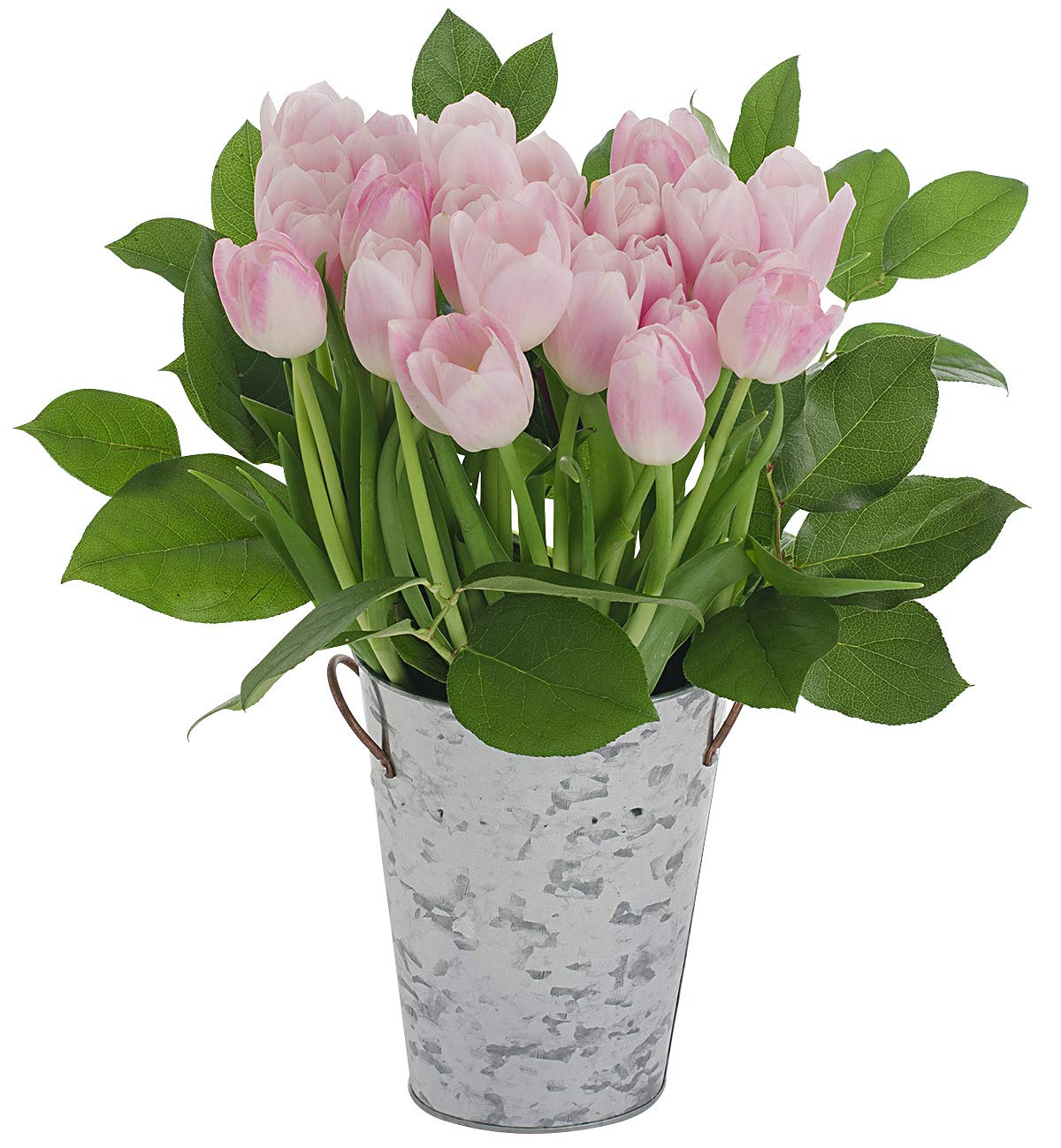Stargazer Barn Blushing Bouquet 2 Dozen Light Pink Tulips with French Bucket Style Vase
