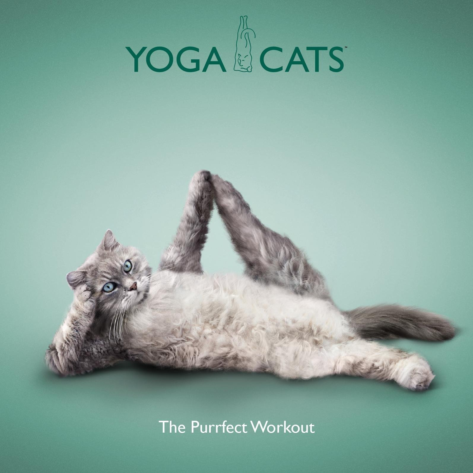 Yoga Cats - The Purrfect Workout by Dan Borris (12-May-2011 ...