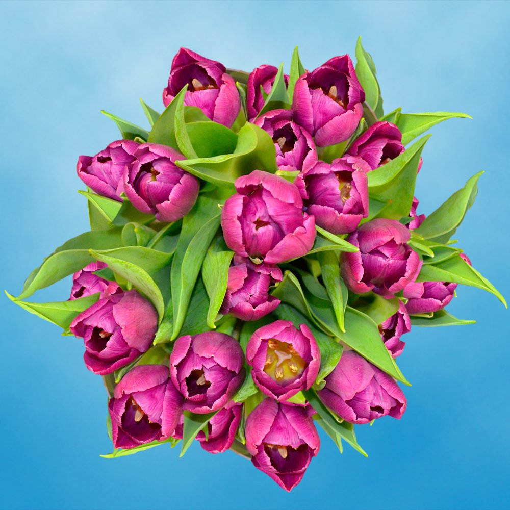 GlobalRose 30 Stems of Purple Tulips Flowers - Fresh Flowers for Delivery by GlobalRose