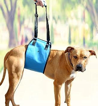 Amzpets - Arnés de elevación para perros, soporte para perros con patas débiles delanteras o