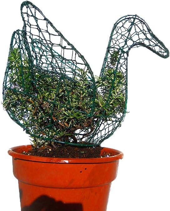 Pato 12 pulgadas de alto W/planta Topiary marco, hecho a mano ...