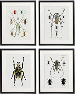 IDIOPIX Vintage Insect Butterfly Moth Home Decor Wall Art Print Set of 4 Prints UNFRAMED No.2