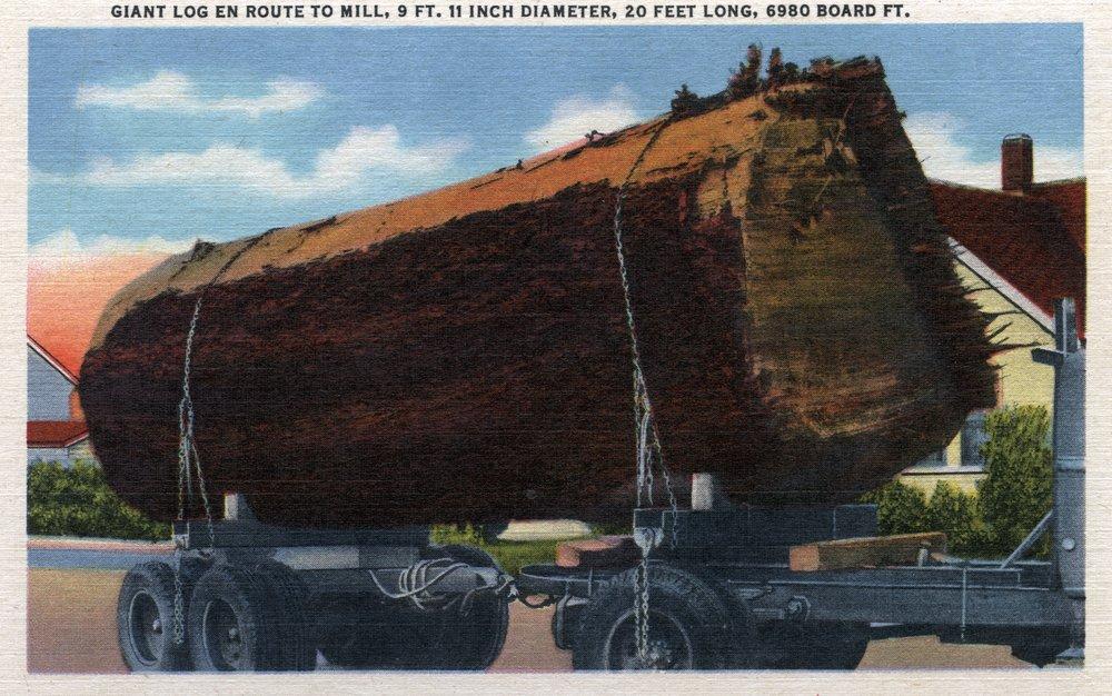 シアトル、ワシントン – Giantログen route toミル 36 x 54 Giclee Print LANT-7481-36x54 36 x 54 Giclee Print  B01MG3HDEA
