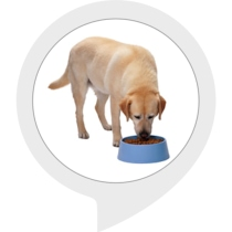 The Dog Feeder