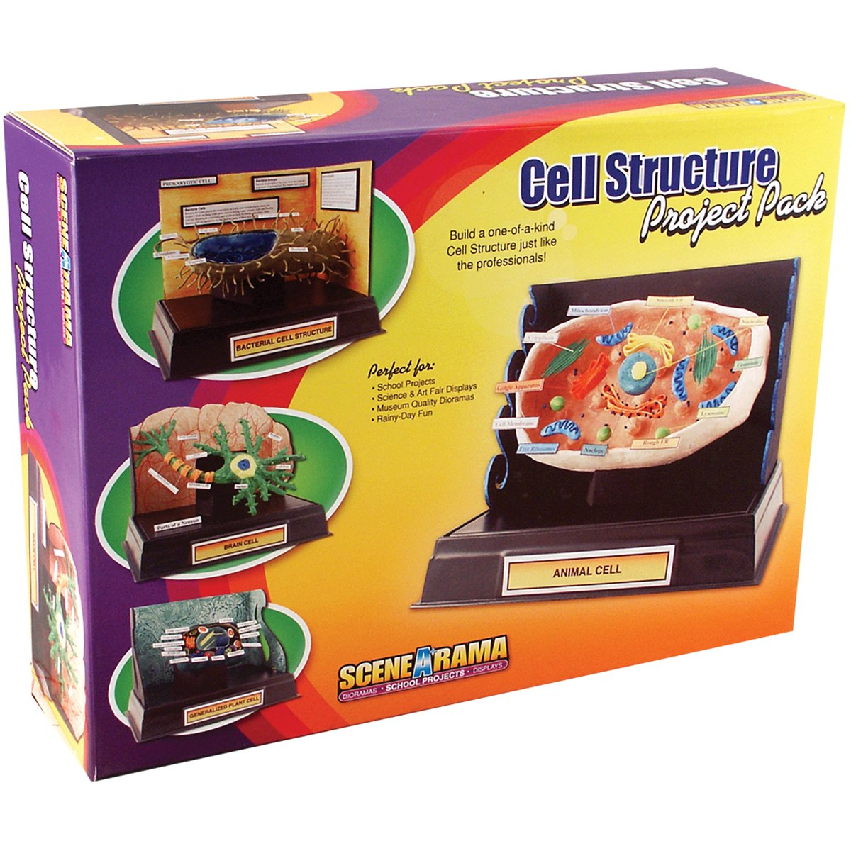 Amazoncom Woodland Scenics Project Pack Cell Structure