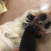 Amazon Com Small Paw Savers Disposable Dog Paw Pads