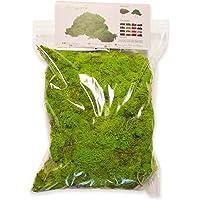 Ortisgreen Liquen Preservado Premium 500 gr. Color Verde