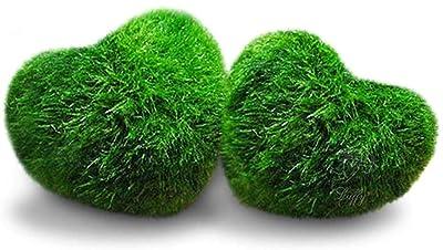Luffy Heart Marimo Moss Balls