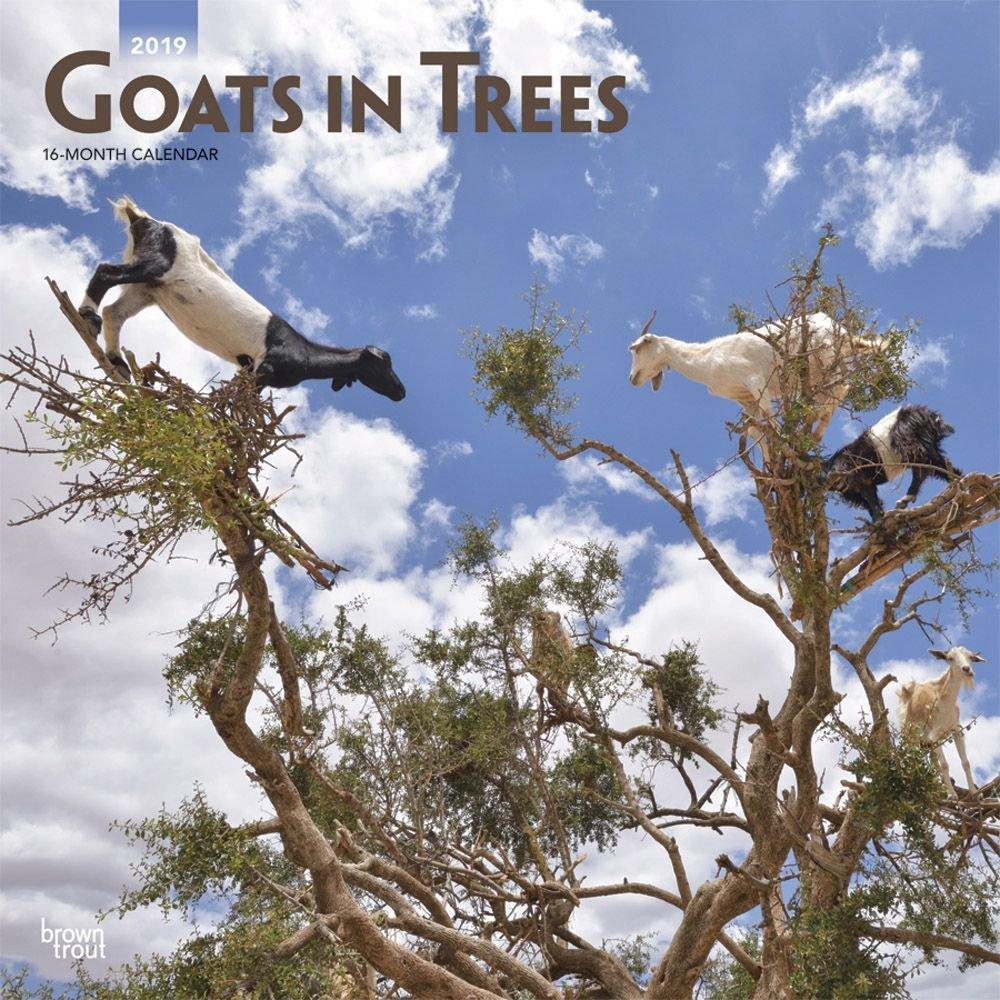 Calendars ヤギ 木の壁 カレンダー 農場 動物  Goats in Trees Wall Calendar B07GZXJQ18