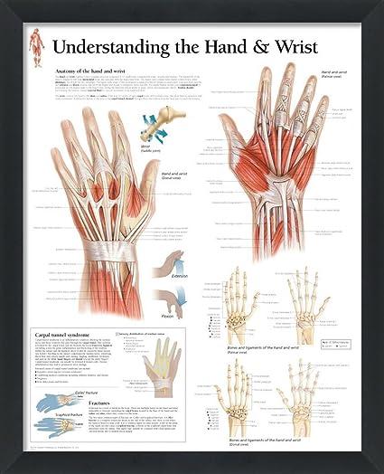 718%2BKJOCFWL._SX425_ amazon com wallsthatspeak understanding the hand and wrist framed