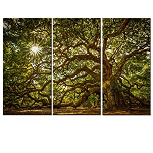 Welmeco Canvas Wall Art Large Old Tree in Sunshine Picture Printed on Canvas Gallery Wraped 3 Pieces Artwork for Living Room Decoration Ready to Hang Modern Nature Art (W-48xH-32)