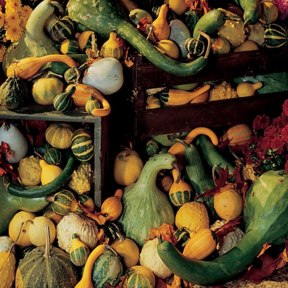 Ornamental gourds 10 seeds