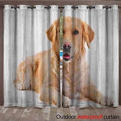 Amazon Com Golden Retriever Window Curtain Young Pedigree Puppy