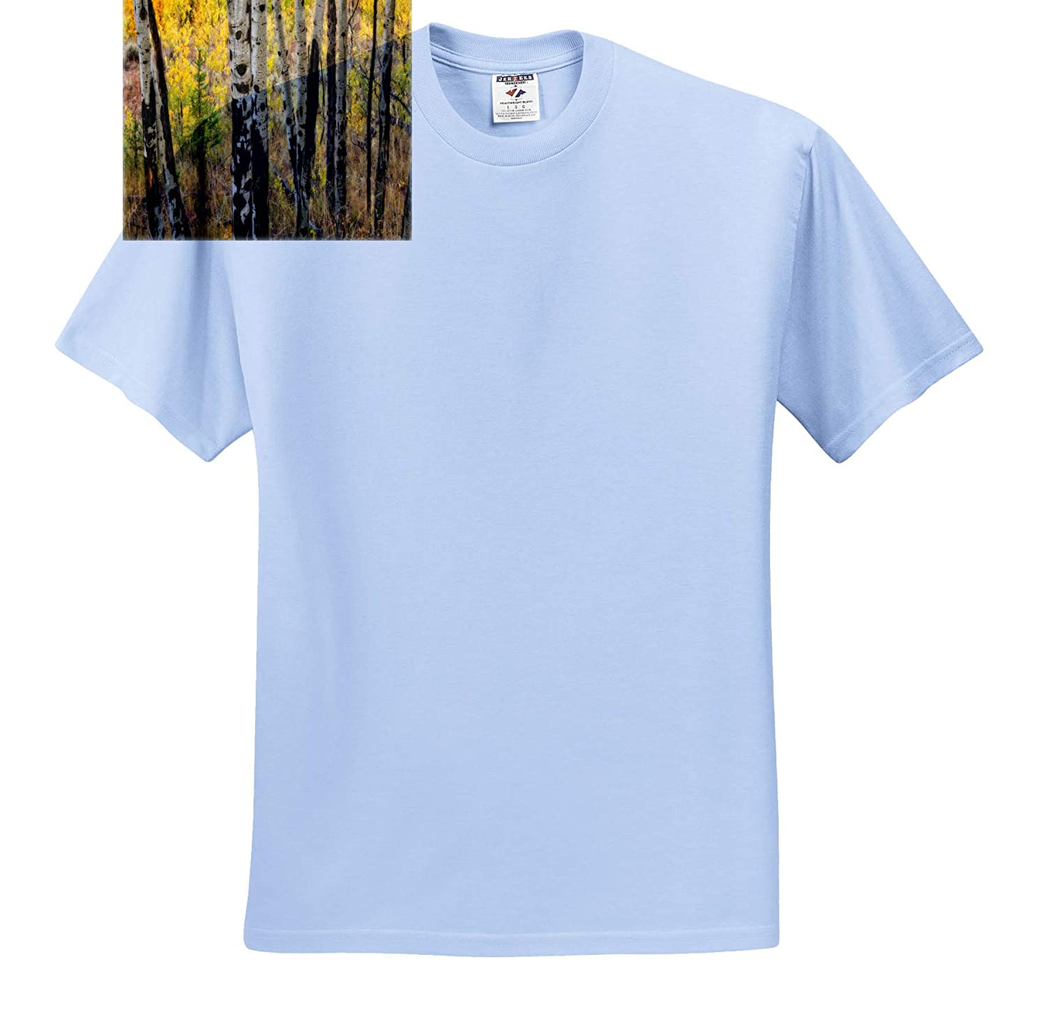 Aspen Trees in Autumn Landscape T-Shirts 3dRose Mike Swindle Photography