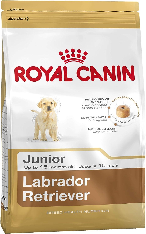 Royal canin - Labrador Junior pienso para Labrador Joven